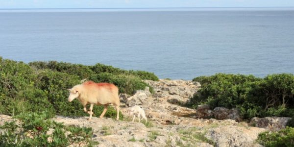 Küstenwanderung Mallorca