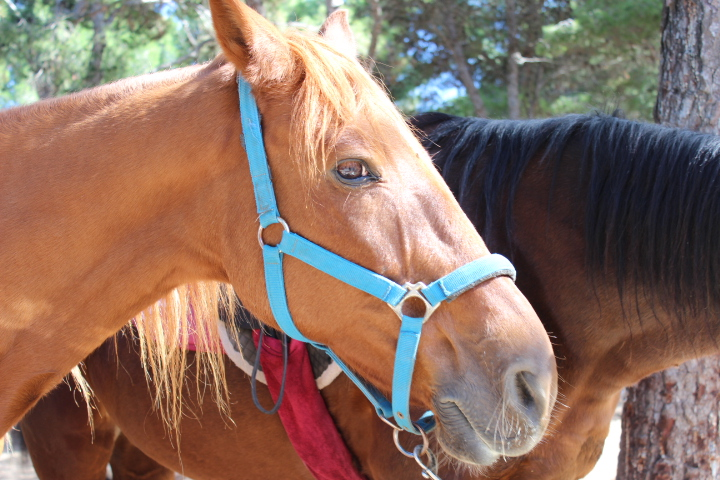 Reiten und Pferde Yogaferien